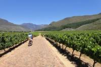 Franschhoek Vignerons Bike Tour from Cape Town