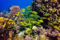 Full-Day Catalina Island Scuba Diving Tour from Punta Cana