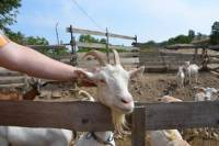 Full-Day Countryside Off-Road Vehicle Tour from Prague: Volcanos, Rana Mountain And Goat Farm Visit