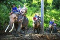 Full Day Elephant Ride and Rafting Adventure Combo from Chiang Mai