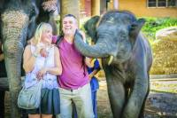 Full-Day Elephant Safari At Mae Rim Training Camp From Chiang Mai