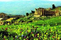 Full Day Small Group Tour to Jerash with Amman Panoramic