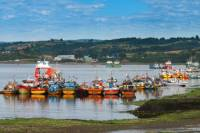 Full-Day Tour: Chiloe Istand Including Ancud, Castro and Dalcahue from Puerto Varas