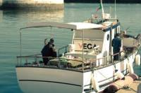 Full-day Tour of Trawler Dolphin-Watching Including Lunch