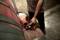 Full-Day Wine Tasting in Mendoza