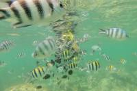 Glass Bottom Boat Excursion with Snorkeling from Diani Beach