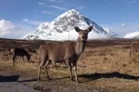 Glencoe, Loch Ness and The Highlands Tour from Edinburgh