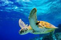Grand Cayman Shore Excursion: West Bay Sightseeing Tour