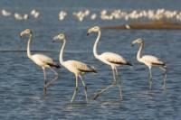 Grand Turk Bird-Watching Tour by Tram