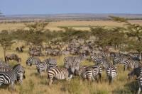 Great Serengeti Migration Trail