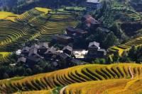 Guilin Bus Tour of Longji Rice Terraces at Ping'an Village
