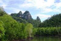 Half-Day Geopark Mangrove Cruise from Langkawi
