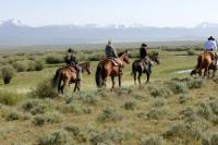 Half-Day Horse Riding Tour to La Palmeraie or Lalla Takerkoust Lake from Marrakech