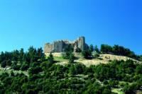 Half Day Tour of Jerash and Ajloun