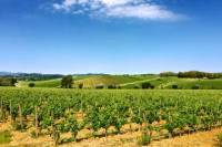Half-day Tour of Maremma Toscana, with Wine-Tasting