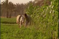 Half-Day Trip to Egyptian Green Farm from Cairo with Breakfast