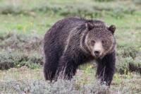 Half-Day Wildlife Safari From Jackson Hole