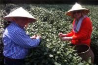Hangzhou Tea Culture Day Tour