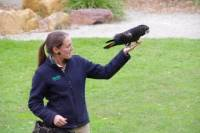 Healesville Sanctuary VIP Meet and Feed Day Trip from Melbourne