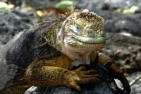 Highlights of Galapagos 8-Day Tour