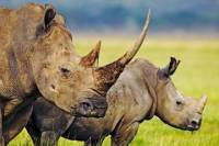 Hluhluwe Game Reserve Tour from Durban