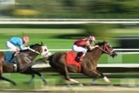 Horse Racing at the Hong Kong Jockey Club Happy Valley