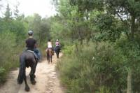 Horseback Riding Tour in Natural Park from Barcelona