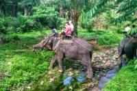 Huay Tho Waterfall Safari with Elephant Trekking and Bathing in Krabi