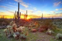 Hummer Night Tour in the Sonoran Desert