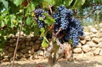 Hvar Wine Tour and Dalmatian Dinner