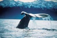Kaikoura Whale Watch Tour from Christchurch including TranzCoastal Rail Journey