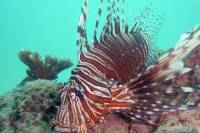 Kata Beach Scuba Diving