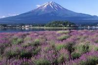 Katsunuma and Fuji Five Lakes Day Trip from Tokyo: Wine Tasting, Fruit Picking and Flower Fields