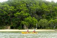 Kayak and Bushwalking Day Tour from the Gold Coast Including Currumbin Wildlife Sanctuary