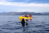 Kayaking Adventure in Kaikoura