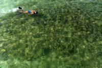 Kealakekua Bay Snorkeling Tour With Optional Honaunau Bay