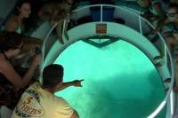Key West Combo: Glass Bottom Boat Tour, Snorkeling and Dolphin Viewing