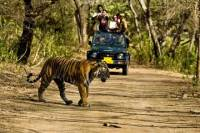 Khajuraho Day Tour: Jungle Safari at Panna National Park and Western and Eastern Temple