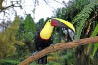 La Fortuna Bird Watching Near the Arenal Volcano