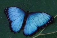 La Fortuna Butterfly and Fauna Garden at Danaus Eco-Center