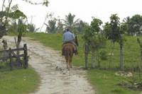 La Palmeraie or Lalla Takerkoust Lake Horse Riding Tour from Marrakech Including Lunch