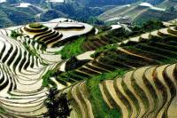 Longji Rice Terraces and Pingan Zhuang Village Day Tour