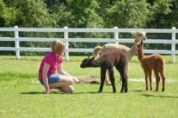 Luina Greine Alpacas Farm Tour