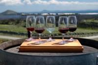Maipú Wine-Tasting Tour from Mendoza Including Trapiche Winery
