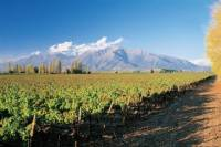 Maipo Valley Wineries Tour from Santiago