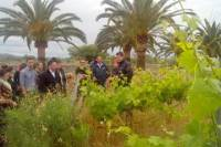 Mallorca 4-Hour Private Wine Tour with Wine-tasting