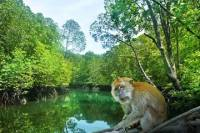 Mangrove Tour in Cherating