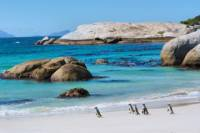 Marine Big 5 Catamaran Safari Adventure from Cape Town