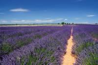 Marseille Shore Excursion: Private Aix-en-Provence and Valensole Lavender Tour