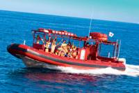Maui Whale-Watching Tour by Raft